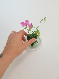 Balancing Sweet pea stems with an Ivy Leaf Stack