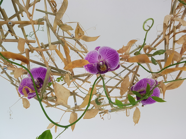 Dried sweet pea vine armature