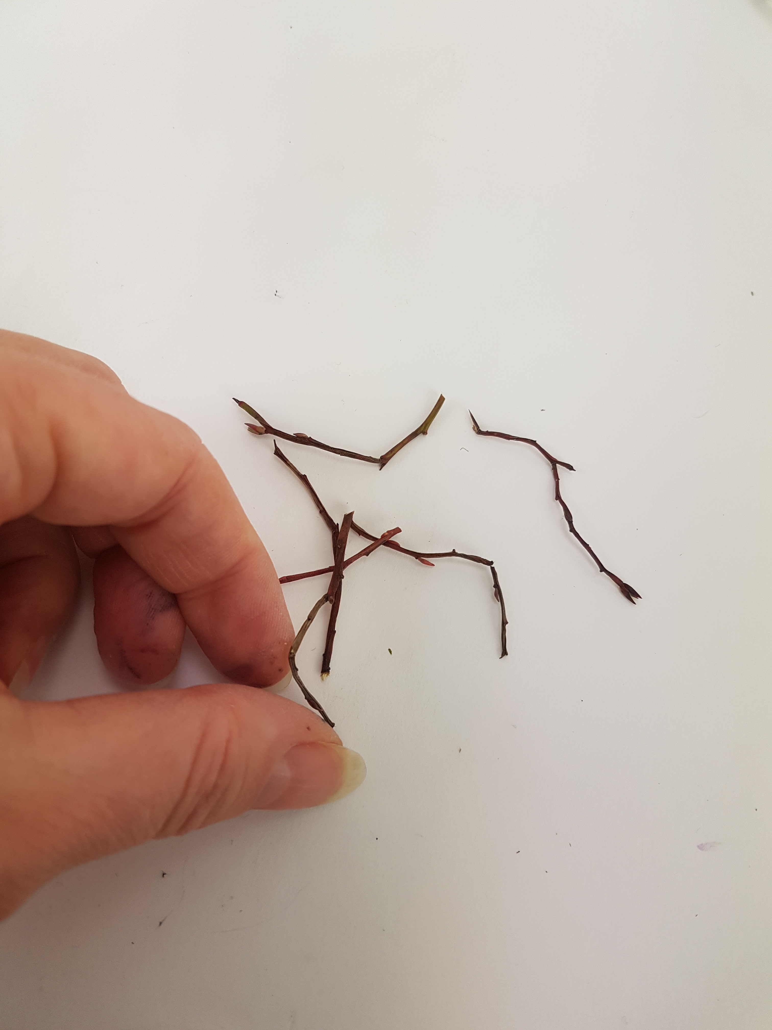Cut eight twigs with interesting curves in them.