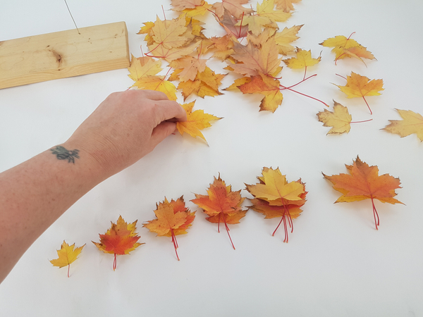 Sort the leaves into stacks similar in size