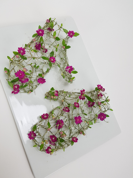 Kalanchoe floral mittens