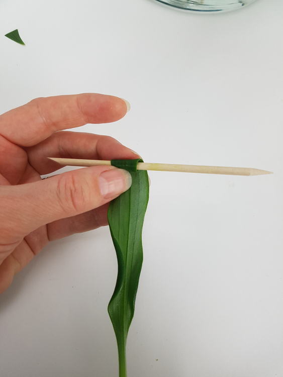 Roll a leaf around a skewer