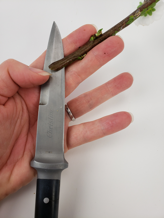 Cut a slit with a sharp knife into a sturdy blossoming twig.