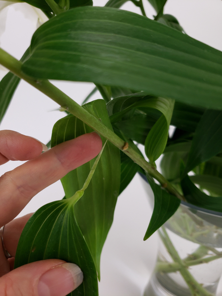 Gently peel the leaf from the stem