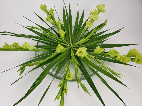 Cut Gladiolus flower spikes arrange in a shallow container