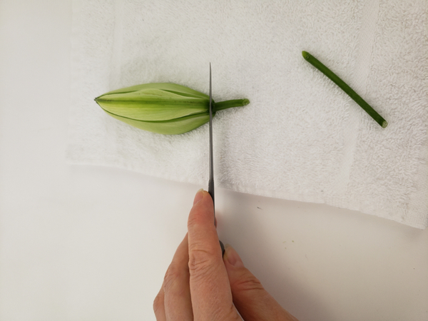 Cut into the flower bud with a sharp knife