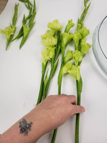 Cut  the Gladiolus flower spikes into three equal sections