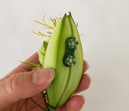 Attaching a lily bud corsage using a BoutStix Floral Magnet