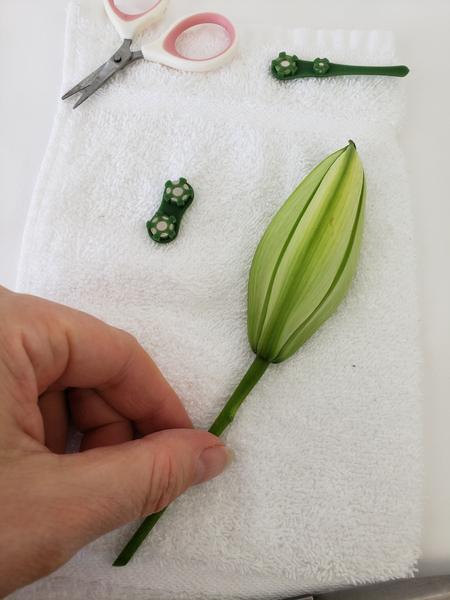 Inspect the bud to find the perfect petal to cut away