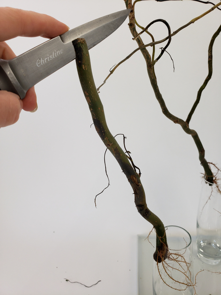 Cut the twigs off of one of the branches and cut a slit into it