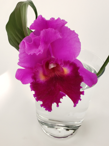 Contemporary and sustainable flower arrangement with a Cattleya orchid