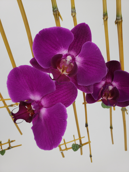 Phalaenopsis orchids in a contemporary floral design