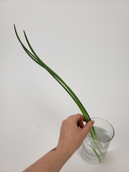 Pick out three long blades of lily grass