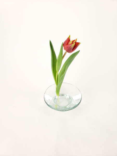 Place a single tulip in a vase so that it stands upright