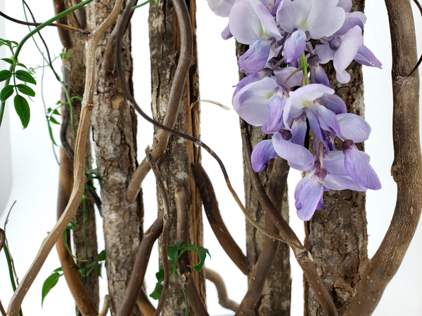 Beautiful blue wisteria flower arranging for sustainable designs