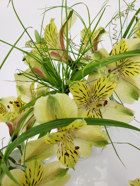 Lime and forest green alstroemeria