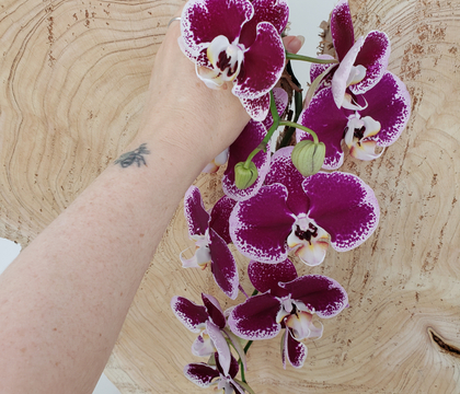 Phalaenopsis orchid cascade over a log slice display