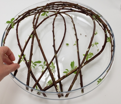 A contained design for watching those pretty twigs get their leaves