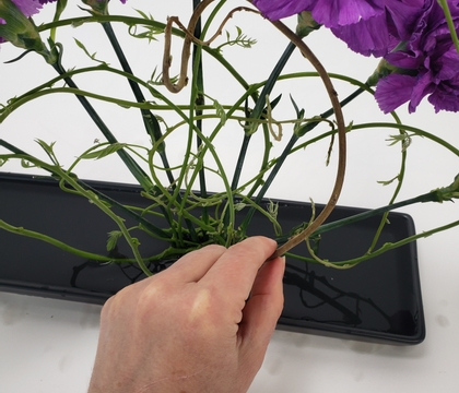 A radiating, gradient carnation design in a shallow container